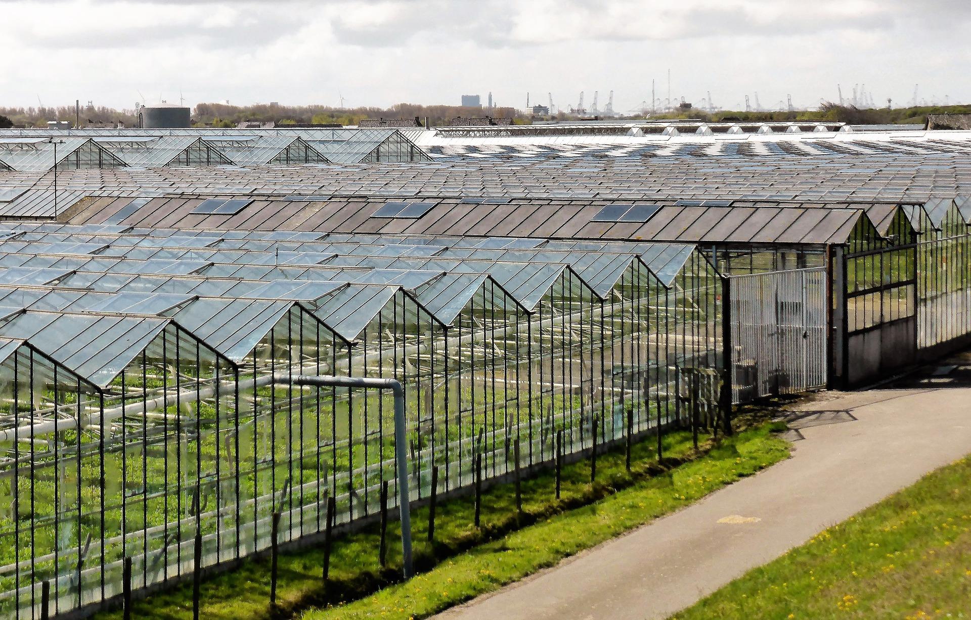 Kassen uitzicht Naaldwijk